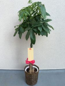 祝開業 観葉植物