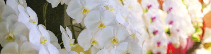 法人様就任祝い 花